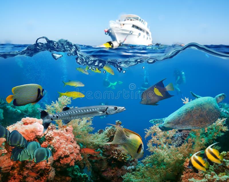 Ζωηρόχρωμος υποβρύχιος σκόπελος με το κοράλλι και τα σφουγγάρια στοκ φωτογραφία