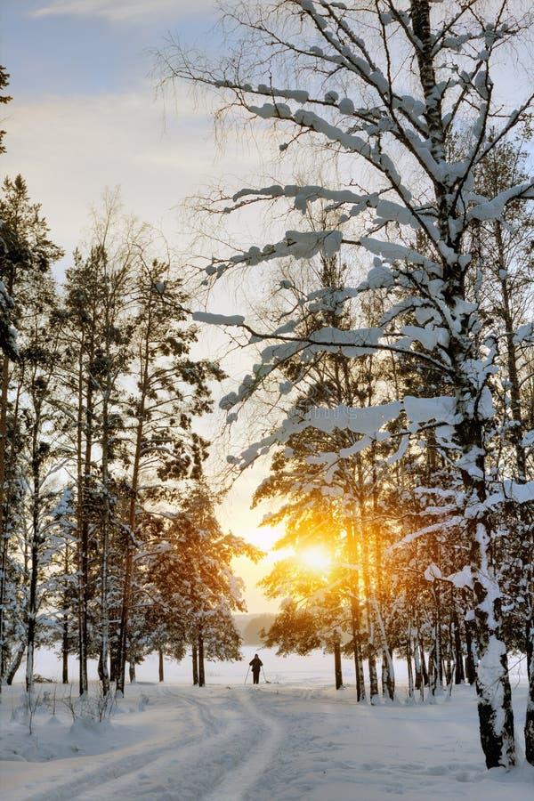 ζωηρόχρωμος χειμώνας ηλι&om στοκ εικόνες με δικαίωμα ελεύθερης χρήσης