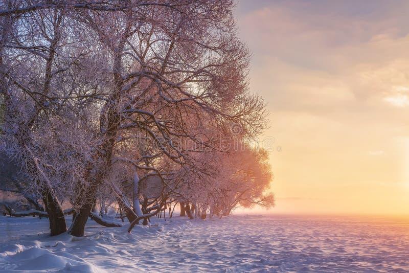 ζωηρόχρωμος χειμώνας τοπί&om Χιονώδη δέντρα στο θερμό φως του ήλιου Καταπληκτική χειμερινή φύση Ρόδινη ηλιοφάνεια στο χειμερινό π στοκ φωτογραφία με δικαίωμα ελεύθερης χρήσης