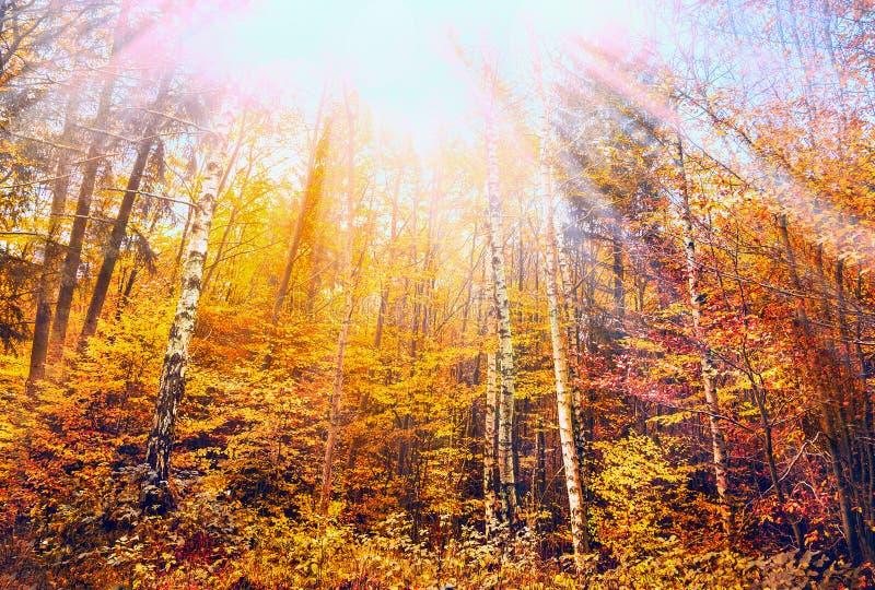 Ζωηρόχρωμο δάσος φθινοπώρου με τις ακτίνες μπλε ουρανού και ήλιων στοκ εικόνα με δικαίωμα ελεύθερης χρήσης