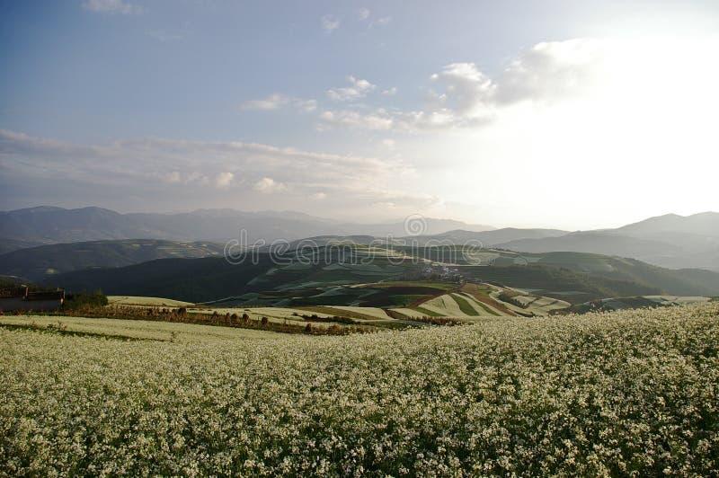 ζωηρόχρωμο έδαφος λάχανων στοκ φωτογραφία με δικαίωμα ελεύθερης χρήσης