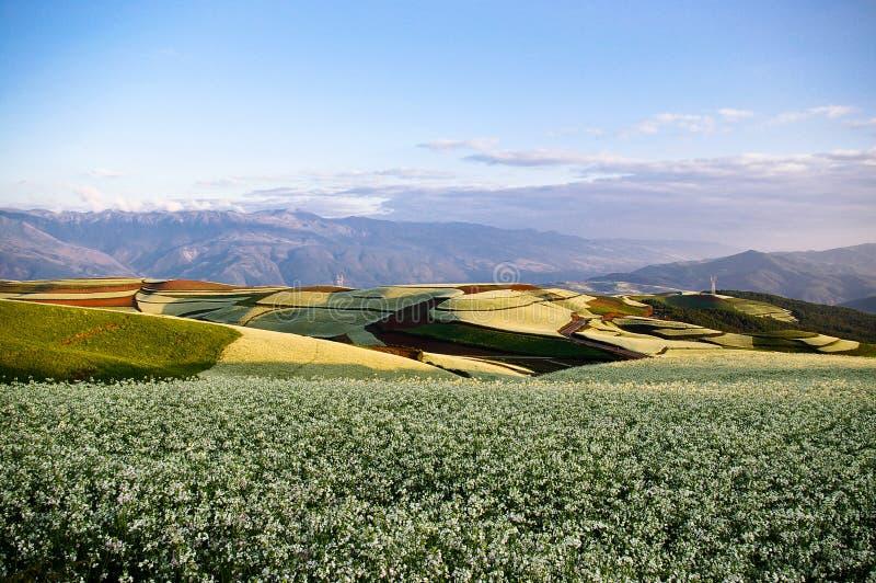 ζωηρόχρωμο έδαφος λάχανων στοκ εικόνες