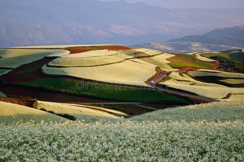 ζωηρόχρωμο έδαφος λάχανων στοκ εικόνα