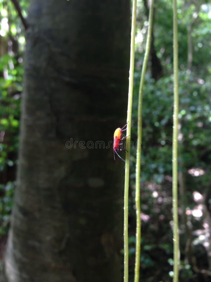 Ζωηρόχρωμο έντομο ST Croix, USVI στοκ φωτογραφία με δικαίωμα ελεύθερης χρήσης