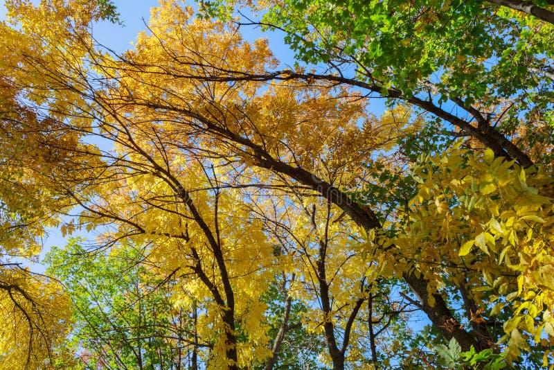 ζωηρόχρωμο ανώτατο δέντρο στοκ εικόνες με δικαίωμα ελεύθερης χρήσης