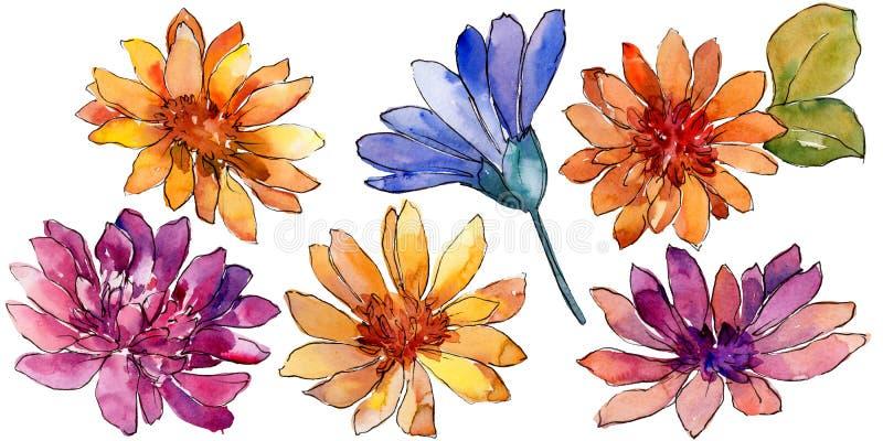 Ζωηρόχρωμο αφρικανικό λουλούδι μαργαριτών Watercolor Floral βοτανικό λουλούδι Απομονωμένο στοιχείο απεικόνισης απεικόνιση αποθεμάτων