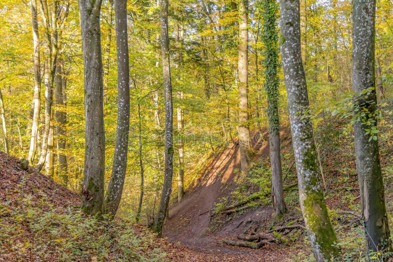 ζωηρόχρωμο δάσος φθινοπώρ& στοκ εικόνες