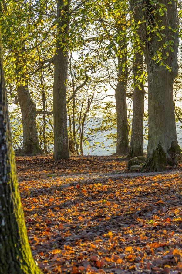 ζωηρόχρωμο δάσος φθινοπώρ& στοκ εικόνα