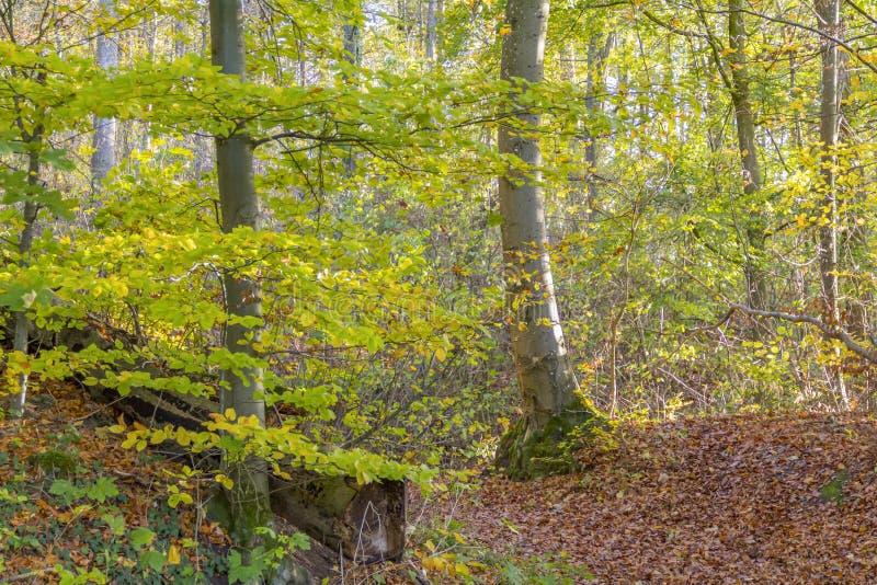 ζωηρόχρωμο δάσος φθινοπώρ& στοκ εικόνα με δικαίωμα ελεύθερης χρήσης