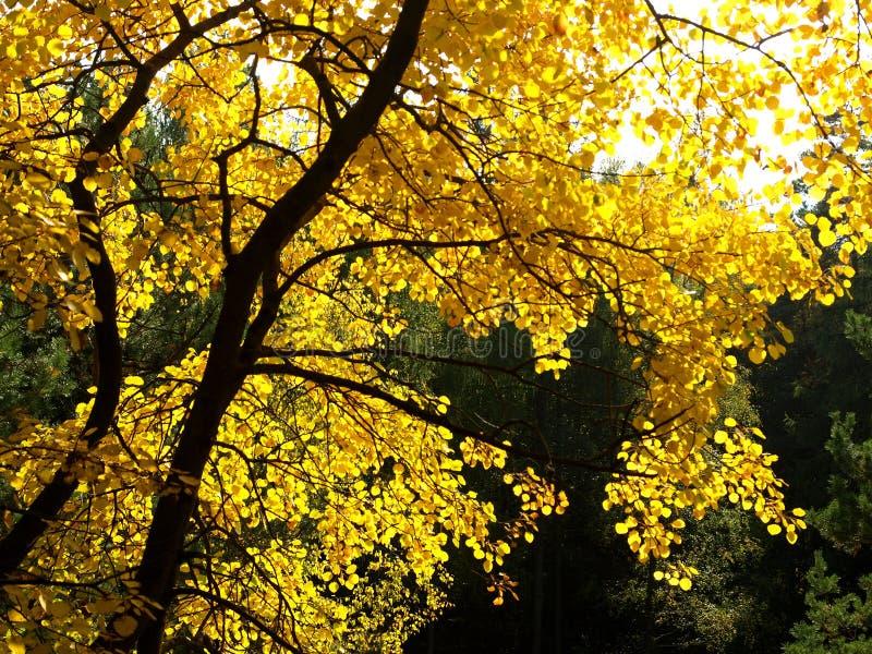 ζωηρόχρωμο δέντρο φθινοπώρ&o στοκ φωτογραφία με δικαίωμα ελεύθερης χρήσης