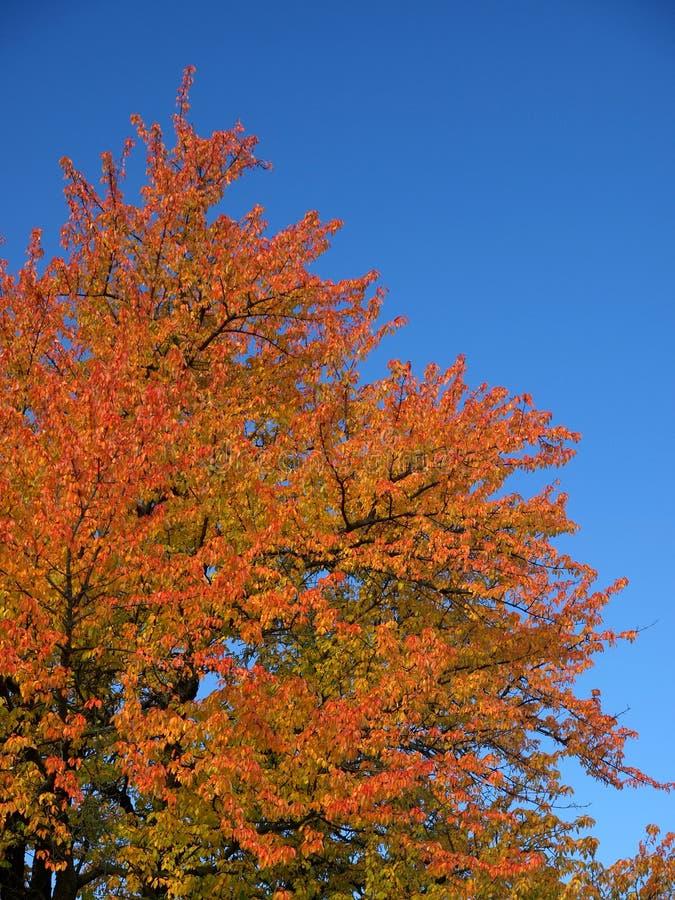 ζωηρόχρωμο δέντρο φθινοπώρ&o στοκ φωτογραφία