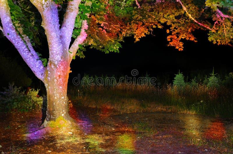 Download Ζωηρόχρωμο δέντρο στοκ εικόνες. εικόνα από πάρκο, πορτοκάλι - 22794226