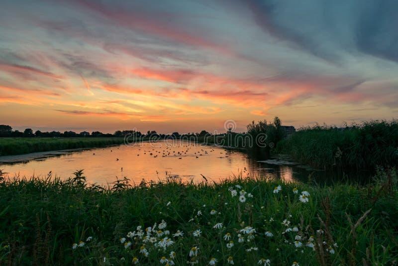 Ζωηρόχρωμο ηλιοβασίλεμα πέρα από μια λίμνη στην Ολλανδία με τα λουλούδια στο πρώτο πλάνο στοκ φωτογραφία με δικαίωμα ελεύθερης χρήσης