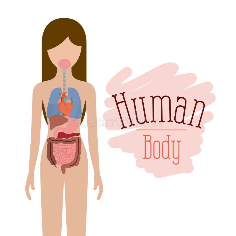 Ζωηρόχρωμο θηλυκό πρόσωπο σκιαγραφιών με το καθορισμένο εσωτερικό σύστημα οργάνων του ανθρώπινου σώματος διανυσματική απεικόνιση