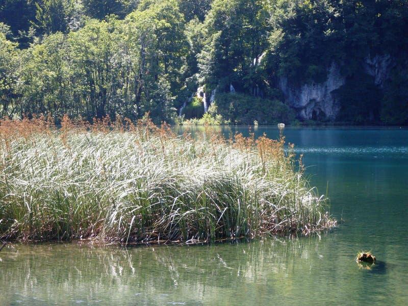Ζωηρόχρωμο και δονούμενο τοπίο της ακτής λιμνών Ήρεμο τοπίο χρήσιμο ως υπόβαθρο Χαμηλότερο φαράγγι λιμνών Nationa λιμνών Plitvice στοκ φωτογραφίες