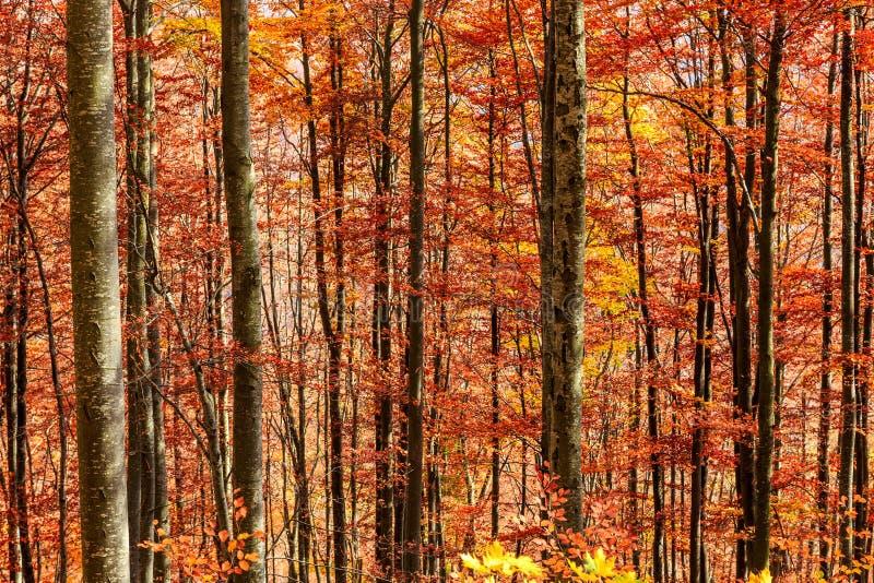Ζωηρόχρωμο και φωτεινό δάσος φθινοπώρου στοκ φωτογραφίες με δικαίωμα ελεύθερης χρήσης