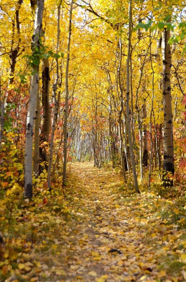 Ζωηρόχρωμο καλυμμένο φύλλο ίχνος στο πάρκο κατά τη διάρκεια του φθινοπώρου στοκ εικόνες