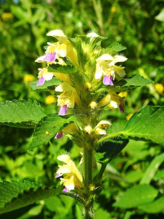 Ζωηρόχρωμο λουλούδι στον τομέα, Λιθουανία στοκ φωτογραφία με δικαίωμα ελεύθερης χρήσης