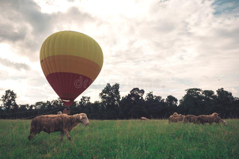 Ζωηρόχρωμο μπαλόνι ζεστού αέρα που πετά επάνω από το αγρόκτημα προβάτων στοκ εικόνες