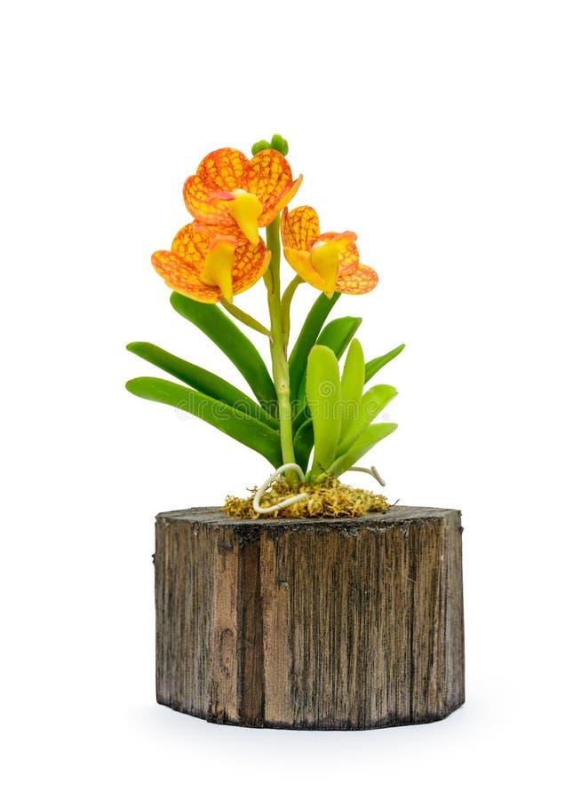 Ζωηρόχρωμο λουλούδι ορχιδεών αργίλου στοκ φωτογραφία