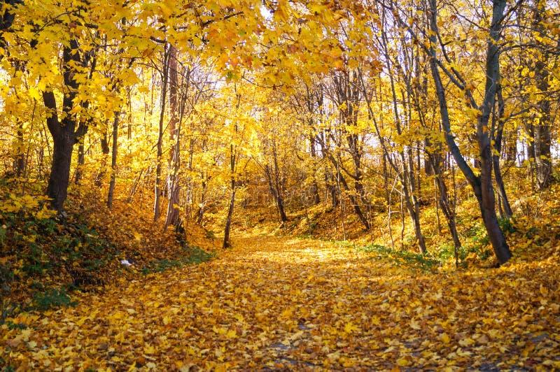 Ζωηρόχρωμο πάρκο Οκτωβρίου φθινοπώρου Αλέα δέντρων φυλλώματος στο πάρκο στοκ φωτογραφία με δικαίωμα ελεύθερης χρήσης