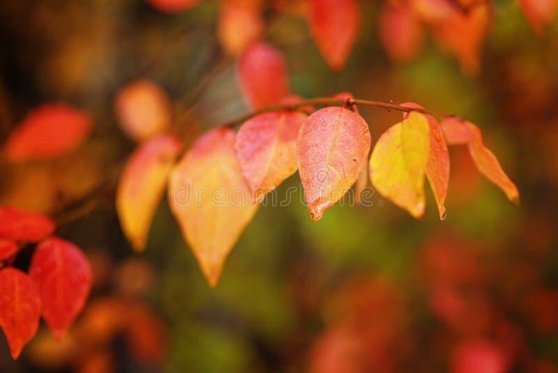 ζωηρόχρωμο πάρκο φυλλώματ& Κόκκινα φύλλα φθινοπώρου στο φυσικό υπόβαθρο στοκ εικόνα με δικαίωμα ελεύθερης χρήσης