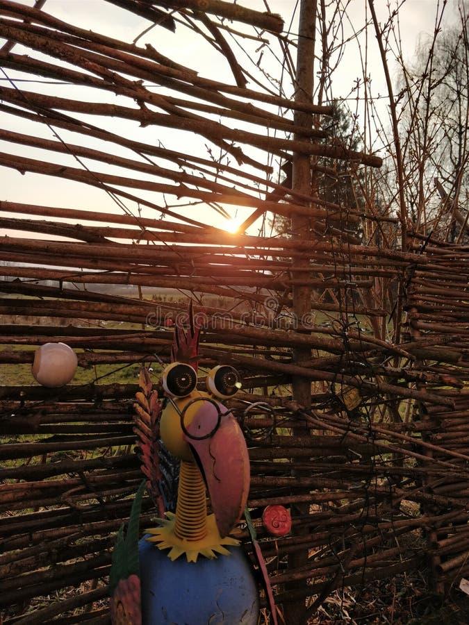 Ζωηρόχρωμο πουλί στην ηλιοφάνεια στοκ εικόνες