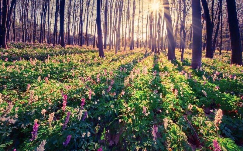 Ζωηρόχρωμο πρωί άνοιξη στο δάσος στοκ εικόνες με δικαίωμα ελεύθερης χρήσης