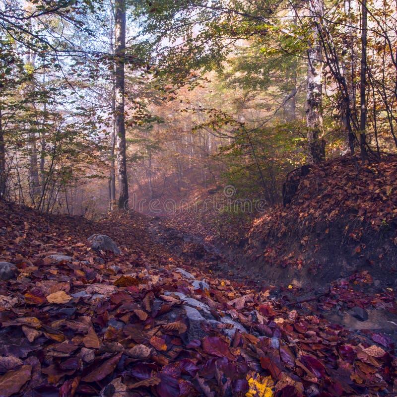Ζωηρόχρωμο τοπίο στα βουνά, ταξίδι της Αμερικής, κόσμος ομορφιάς στοκ φωτογραφία με δικαίωμα ελεύθερης χρήσης