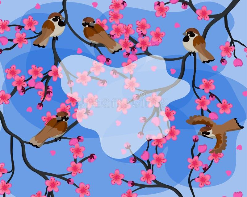Ζωηρόχρωμο υπόβαθρο άνοιξη με τα σπουργίτια που κάθονται στο διάνυσμα κλάδων sakura απεικόνιση αποθεμάτων
