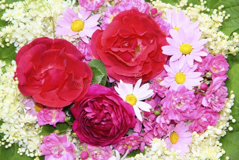 Ζωηρόχρωμο υπόβαθρο λουλουδιών με τα κόκκινα και ρόδινα τριαντάφυλλα, μαργαρίτες στοκ φωτογραφία με δικαίωμα ελεύθερης χρήσης