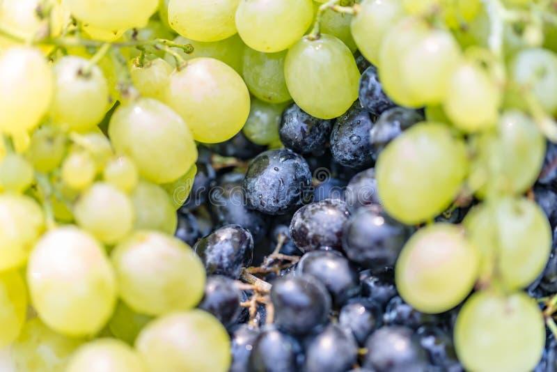 Ζωηρόχρωμο υπόβαθρο σταφυλιών Φρέσκα φρούτα θερινού φθινοπώρου στοκ εικόνες