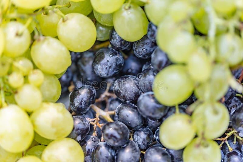 Ζωηρόχρωμο υπόβαθρο σταφυλιών Φρέσκα φρούτα θερινού φθινοπώρου στοκ φωτογραφίες με δικαίωμα ελεύθερης χρήσης