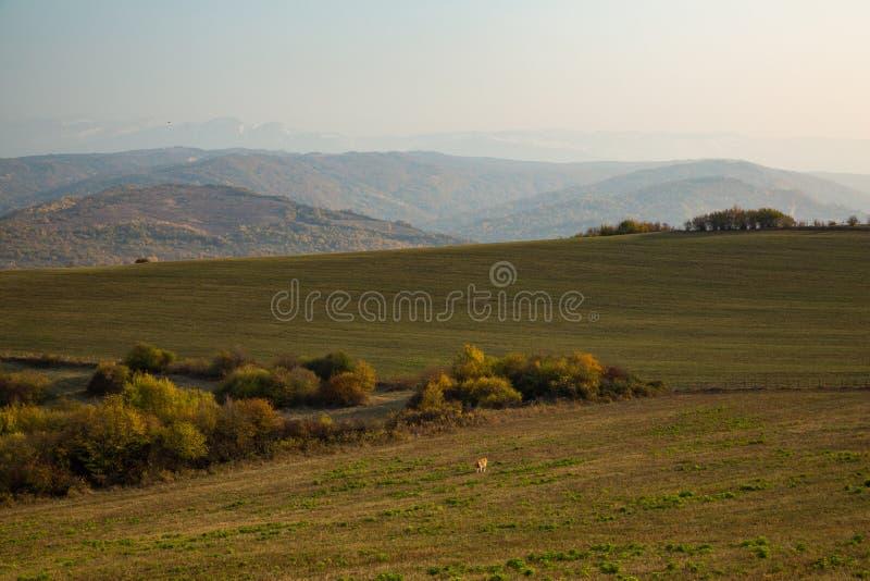Ζωηρόχρωμο φθινόπωρο στα βουνά στοκ εικόνες