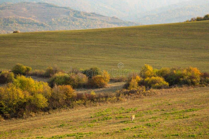 Ζωηρόχρωμο φθινόπωρο στα βουνά στοκ φωτογραφίες με δικαίωμα ελεύθερης χρήσης