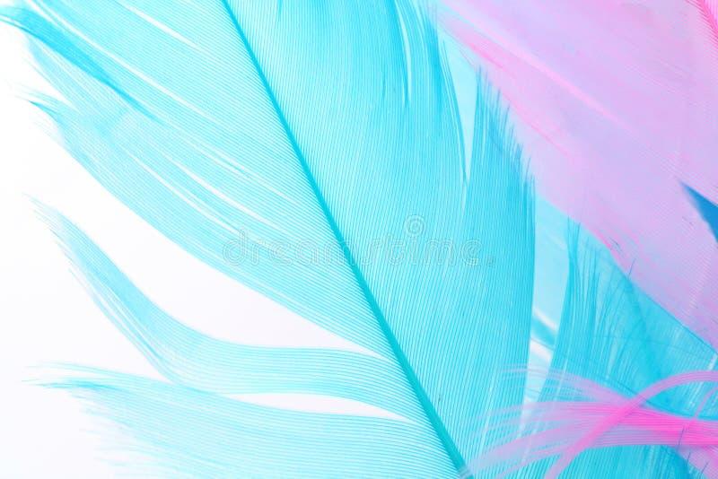 Download ζωηρόχρωμο φτερό στοκ εικόνες. εικόνα από ανασκόπησης - 1538966