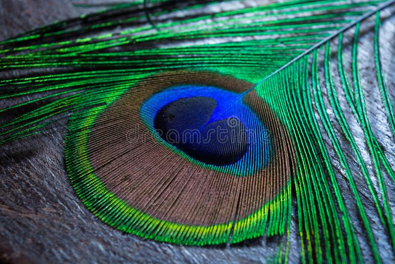 ζωηρόχρωμο φτερό peacock στοκ φωτογραφίες