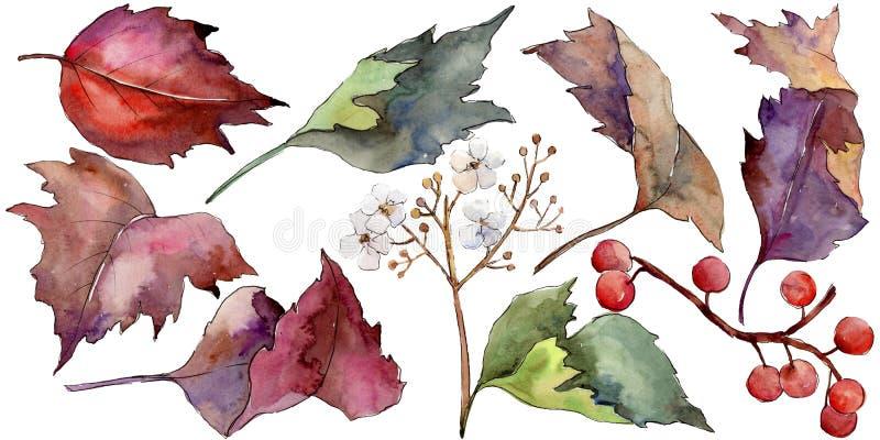 Ζωηρόχρωμο φύλλο viburnum Watercolor Floral φύλλωμα βοτανικών κήπων φυτών φύλλων Απομονωμένο στοιχείο απεικόνισης διανυσματική απεικόνιση