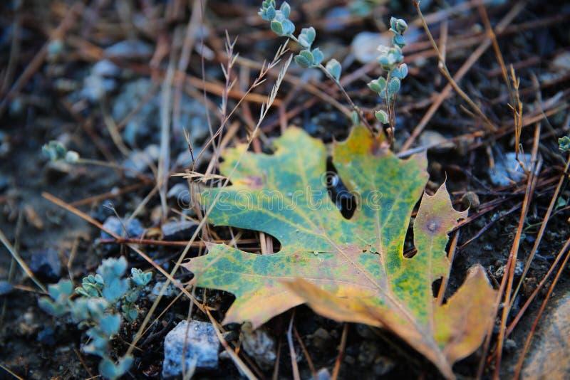Ζωηρόχρωμο φύλλο στο τραγανό έδαφος πρωινού στοκ φωτογραφία