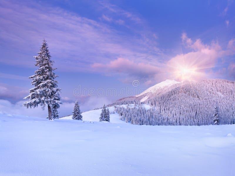 Ζωηρόχρωμο χειμερινό πρωί στα Καρπάθια βουνά. στοκ εικόνες