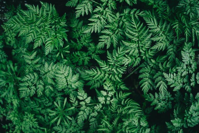 Ζωηρόχρωμο juicy υπόβαθρο με τα πράσινα φύλλα όπως τα φύλλα φτερών στοκ εικόνες με δικαίωμα ελεύθερης χρήσης