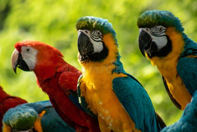 ζωηρόχρωμο macaw στοκ εικόνες με δικαίωμα ελεύθερης χρήσης