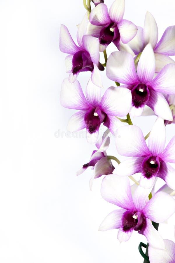 ζωηρόχρωμο orchid στοκ εικόνες