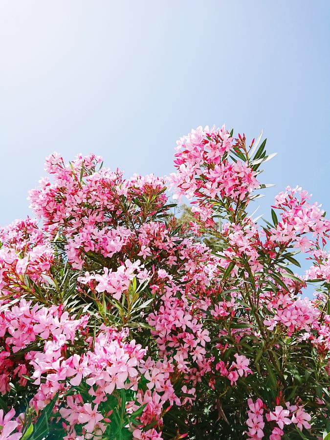 Ζωηρό τροπικό καθιερώνον τη μόδα λουλούδι strelitzia δυσλειτουργίας υπερφυσικό και floral υπόβαθρο στοκ φωτογραφία με δικαίωμα ελεύθερης χρήσης