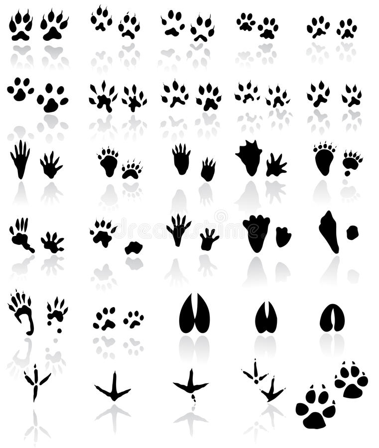 ζωικά ίχνη ονόματος πουλιώ& ελεύθερη απεικόνιση δικαιώματος