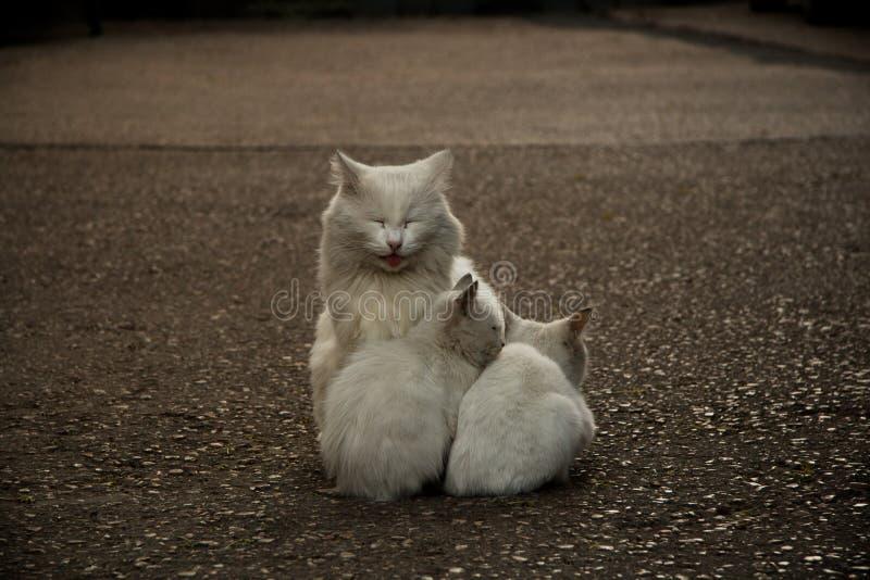 ζωικά οικογενειακά αστεία απομονωμένα αντικείμενα χαρακτήρων γατών κινούμενων σχεδίων στοκ φωτογραφία με δικαίωμα ελεύθερης χρήσης