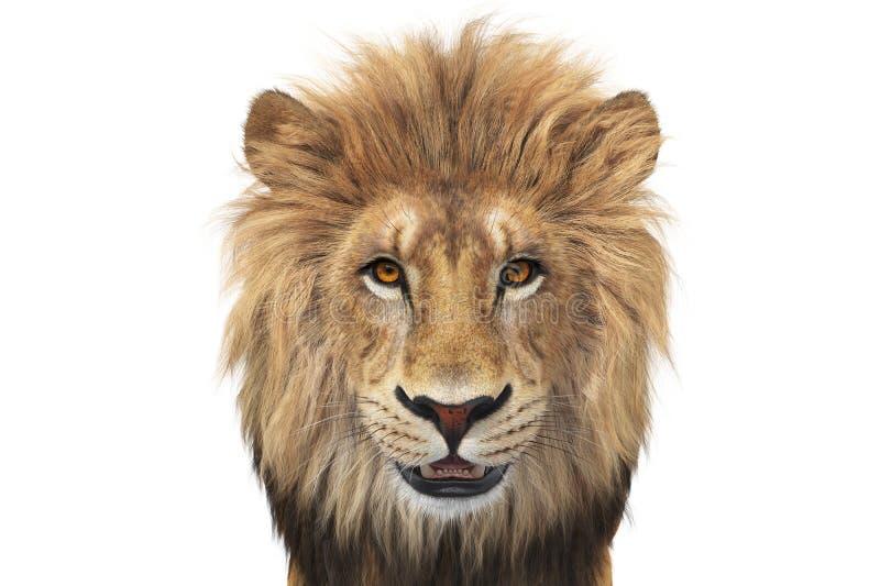 Ζωική άγρια μπεζ και πορτοκαλιά, στενή άποψη λιονταριών ελεύθερη απεικόνιση δικαιώματος