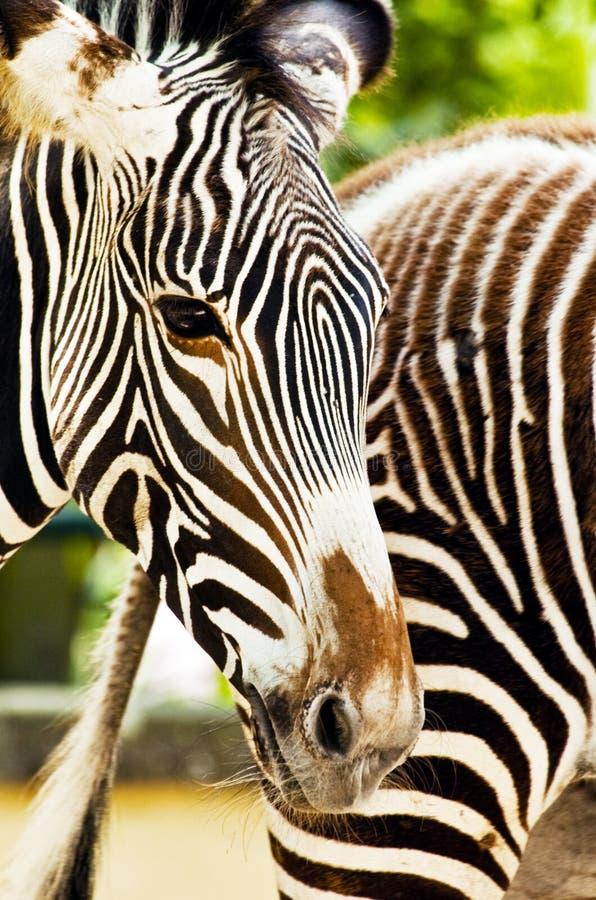 ζωικός ζωολογικός κήπος στοκ εικόνα με δικαίωμα ελεύθερης χρήσης