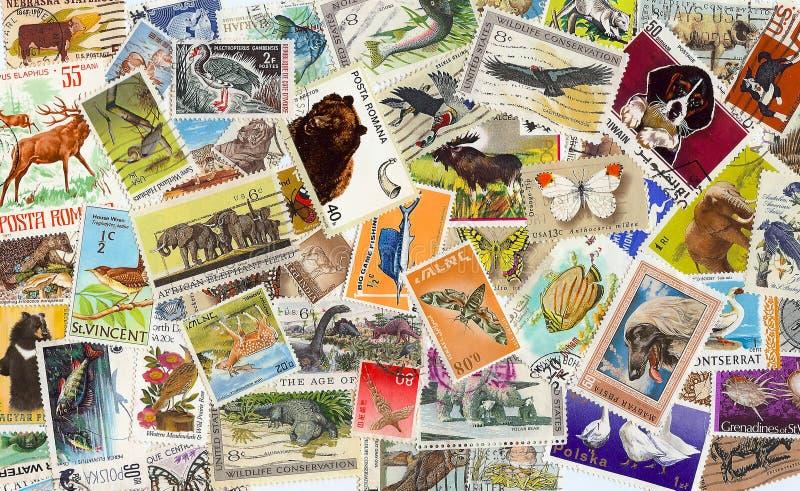 ζωικός τρύγος γραμματοσήμων συλλογής στοκ φωτογραφίες