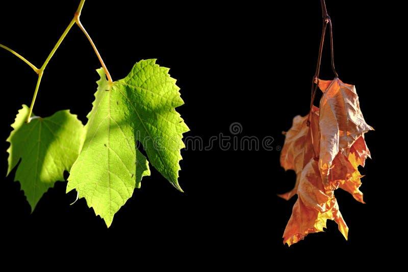 Ζωντανά και νεκρά φύλλα στοκ φωτογραφία